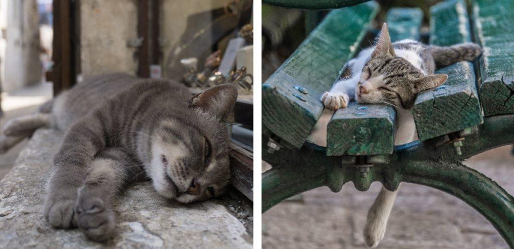 Коты Котор достопримечательности
