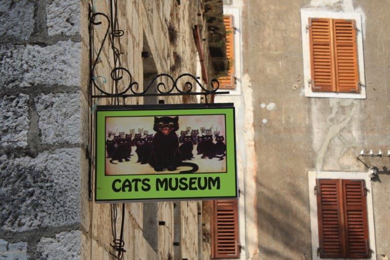 музей котов котор